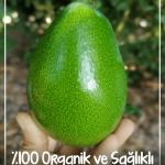 avokado-dunyasi-satis-alanya-1