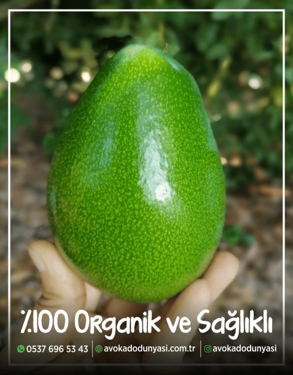 avokado-dunyasi-satis-alanya-2